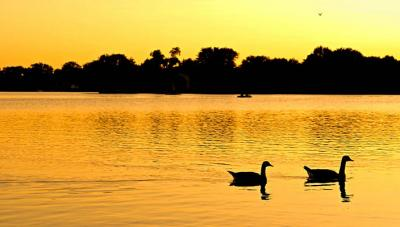 pair of ducks on tranquil lake with sunset