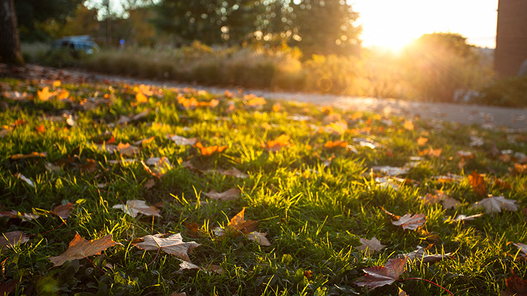 image of fall leaves on grass with the sun shining in the background