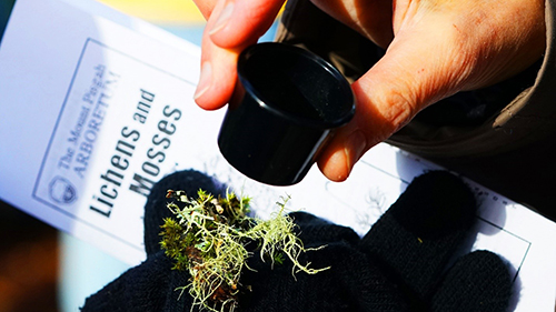 image looking at lichen