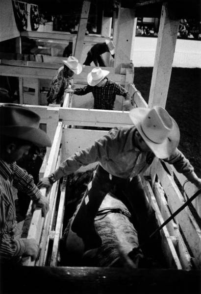 Coyboys entering bucking chutes, c.1971, Grayson Mathews
