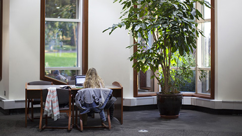 girl studying in front of a window