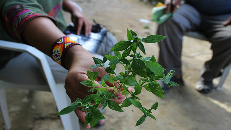 photo of a hand holding out a plant